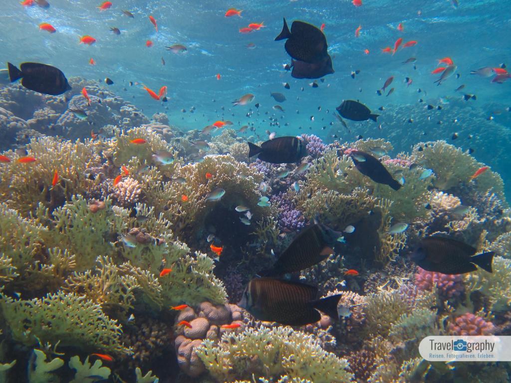 Korallen Abu Dabab