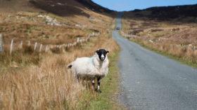 irland teil2