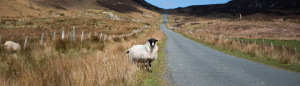 Unsere Fotoreise durch Irland: Teil 2