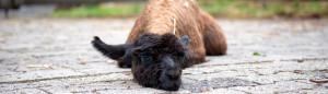 Unterwegs mit Lamas