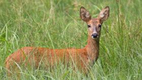 safari in deutschland wildtierbeobachtung im taunus