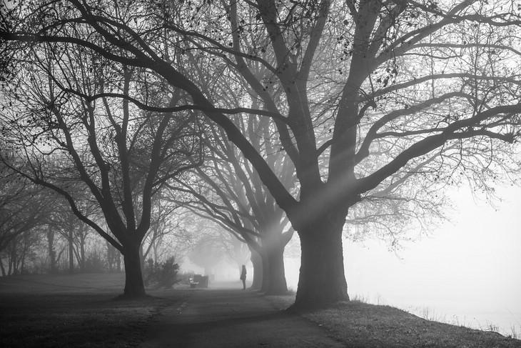 Herbstfoto: Morgennebel am Rhein