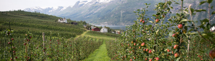 äpfel ullensvang