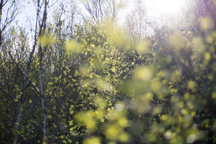 Blühende Büsche am Offersoykammen