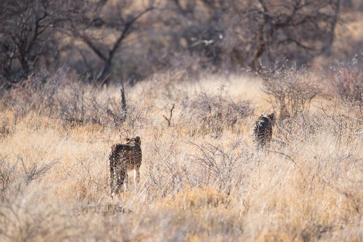Auf den Spuren der Leoparden