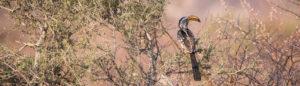 Einblick in die Tierwelt: Die Vögel Namibias