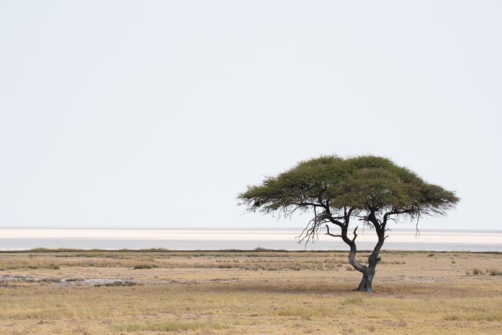 Steppe im Etosha Nationalpark