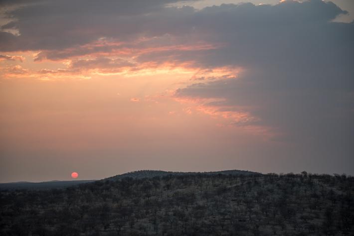 Schöne Sonnenunteränge sind im Etosha Nationalpark keine Seltenheit