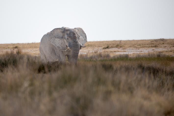 Unterwegs im Etosha Nationalpark