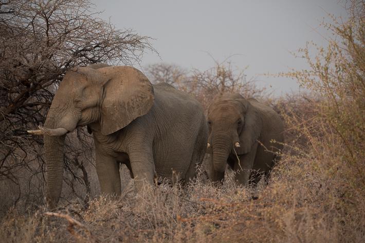 Elefanten angestrahlt von der untergehenden Sonne