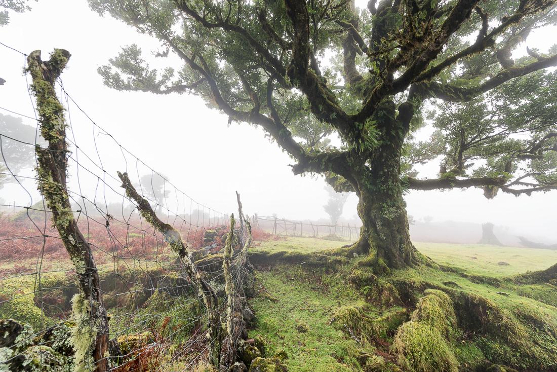 Nicht nur die Bäume sind alt