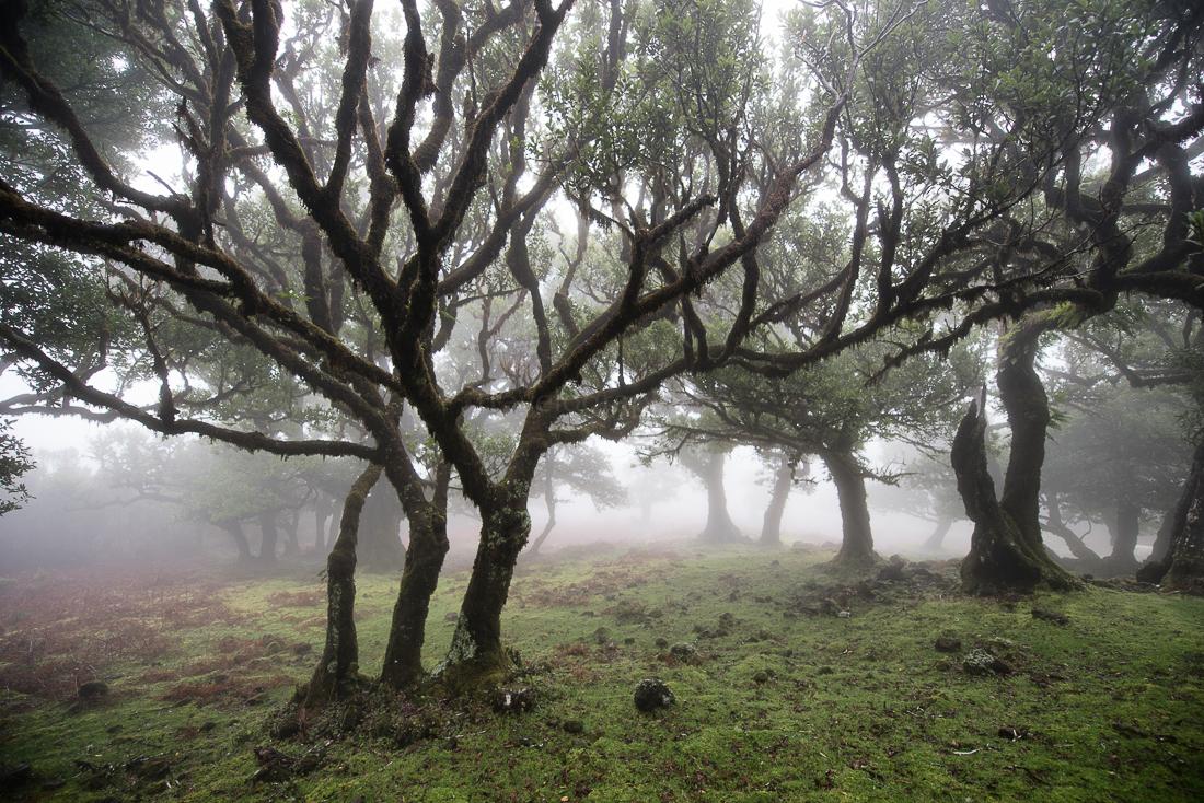 Nebel und Lorbeerbäume soweit das Auge reicht