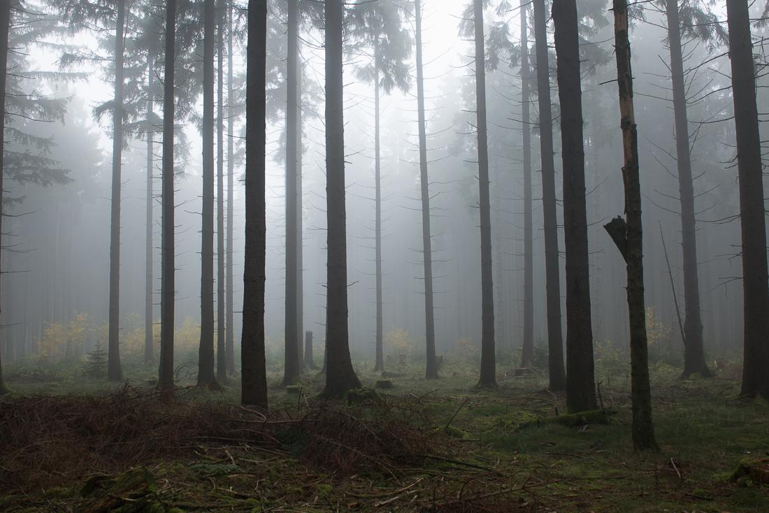 Instagram Look - Nebelbild von der Hohen Wurzel nahe Wiesbaden