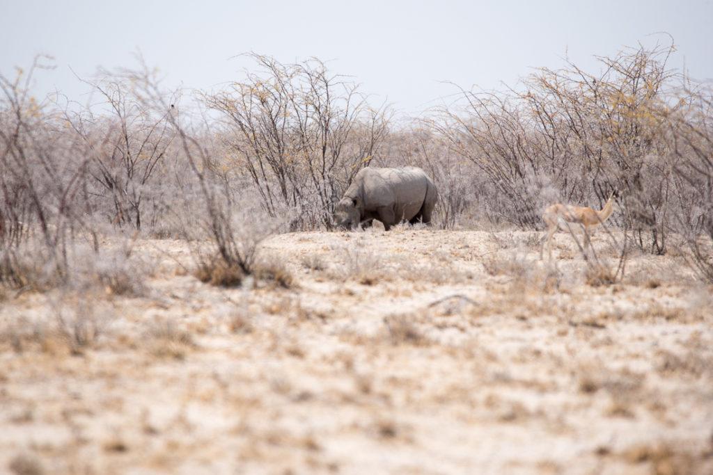 Unser erstes Nashorn im Etosha Nationalpark