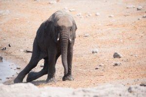 Namibia Etosha-4104