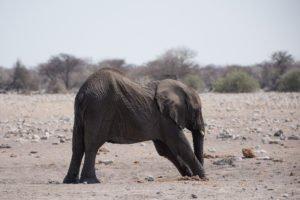 Namibia Etosha-4115