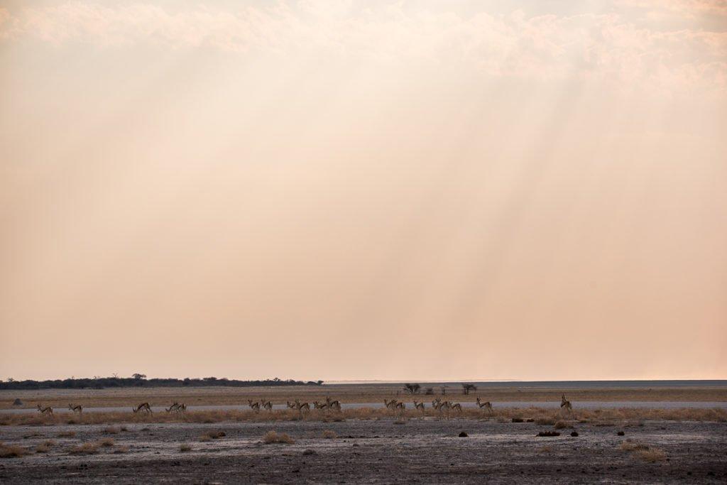 Namibia Etosha-4203