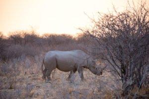 Und Tschüss Nashorn