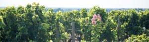 Saint-Émilion – über Nacht in einem Weingut