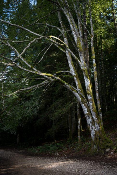 Weg zu den Cascades du Hérisson